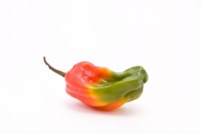 http://www.jamaica-reggae-music-vacation.com/Jamaican-Hot-Sauce.html, scotch bonnet pepper, jamaica hot pepper, jamaican hot sauce