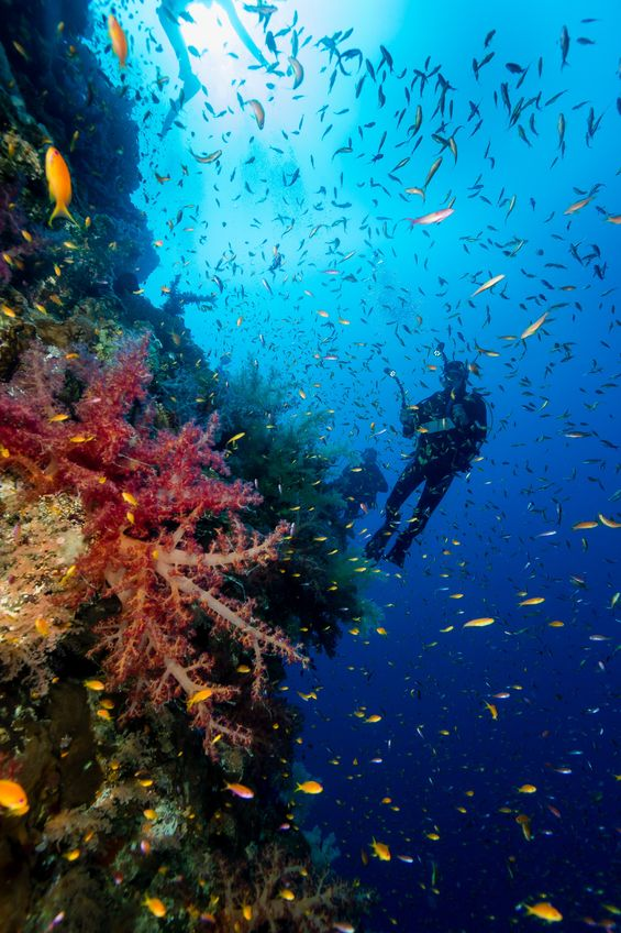 Scuba Diving in Montego Bay, Jamaica https://www.jamaica-reggae-music-vacation.com/Scuba-Diving-In-Montego-Bay.html