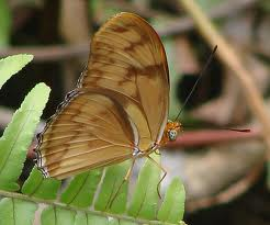 https://www.jamaica-reggae-music-vacation.com/Attractions-In-Negril-Jamaica.html, Butterfly at Royal Palm Reserve, Negri, Jamaica