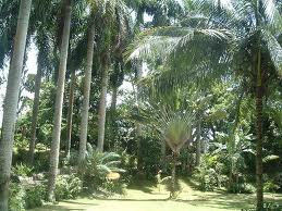 Coyaba River Garden and Museum, Cultural Attractions in Jamaica