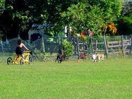Dogsledding, Jamaica,  http://www.jamaica-reggae-music-vacation.com/Ocho-Rios-Tours.html