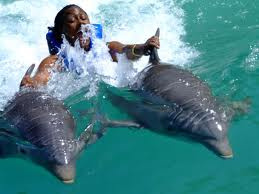 Dolphin Cove, Ocho Rios, https://www.jamaica-reggae-music-vacation.com/Travel-Ocho-Rios.html