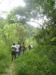Hiking In Jamaica