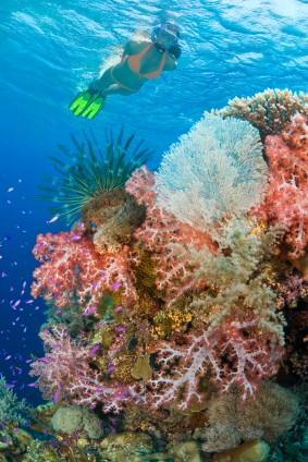 Snorkeling, Ocho Rios, Jamaica