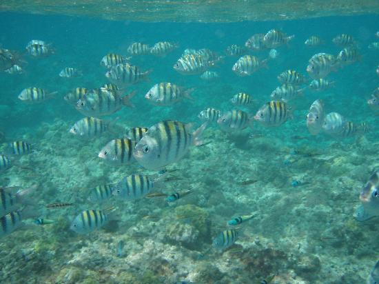 Snorkeling in Jamaica, https://www.jamaica-reggae-music-vacation.com/Scuba-Diving-In-Montego-Bay.html