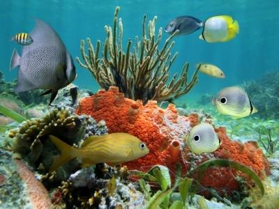 Montego Bay - Coral reef