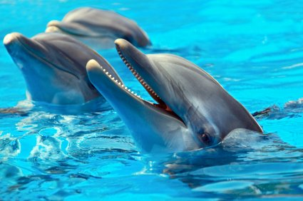 Dolphin Tour, Ocho Rios, Jamaica, http://www.jamaica-reggae-music-vacation.com/Ocho-Rios-Tours.html