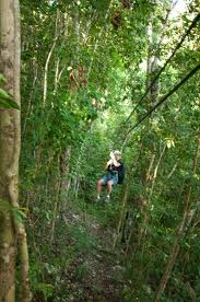 Zipline, Jamaica, https://www.jamaica-reggae-music-vacation.com/Ocho-Rios-Tours.html